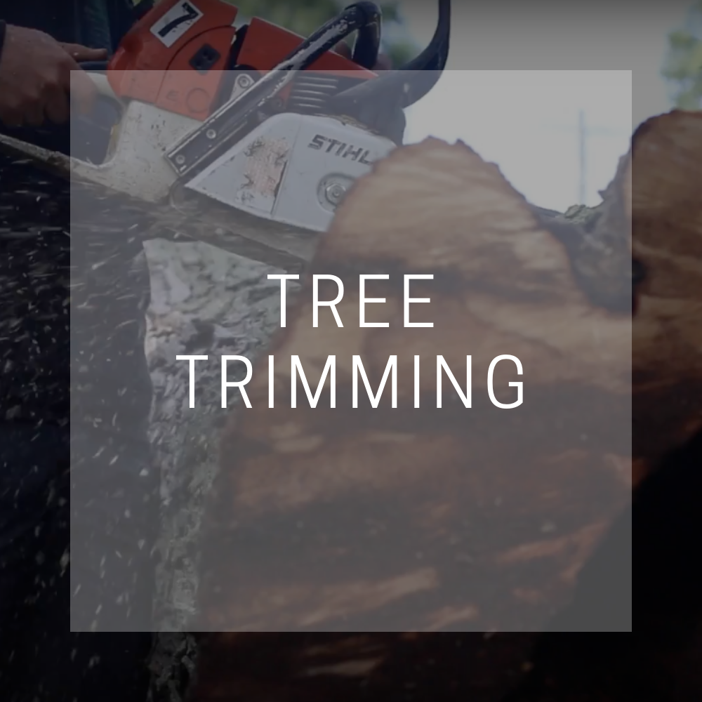 tree-trimming-columbus-ohio-trees-are-my-business